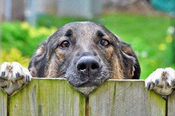 Orakelet svarer: Hunder bjeffer hele natta!